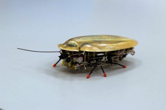 Un-pequeño-y-desagradable-pero-interesante-robot