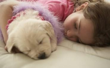dormir-con-el-perro-es-bueno-o-malo